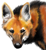 Maned wolf by Tianithen