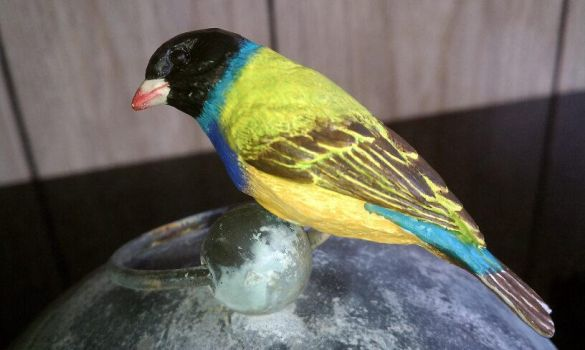 Gouldian Finch by Batalha-Enterprises
