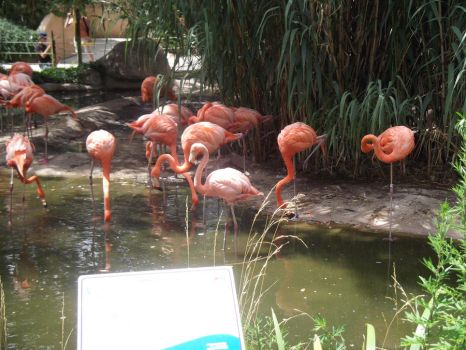 Flamingos by cosmo1996