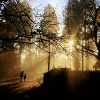 Foggy walk by dctuck