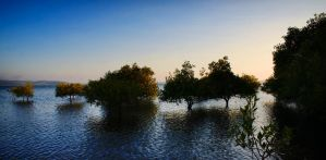 Mangroves by sektor172