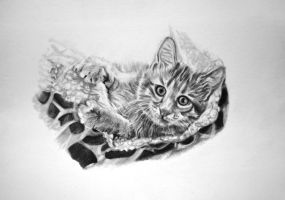 Biscuit the Kitten by ShanghaiSarah