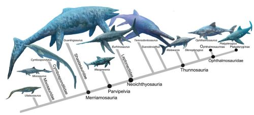 Ichthyopterygia phylogeny by NGZver