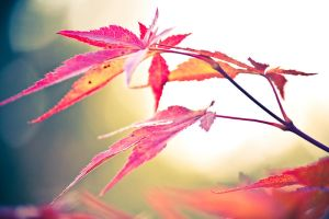 Autumn colours 3 by nomatterwhy