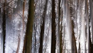 trees by Blaumohn