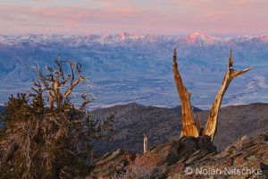 Bristlecone Bishop Sunrise by narmansk8