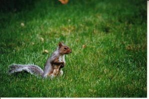 squirrel by wphotographer44