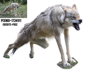 PNG- Wolf by 35-Elissandro