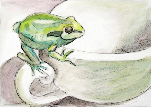 Frog by CloudWatcher