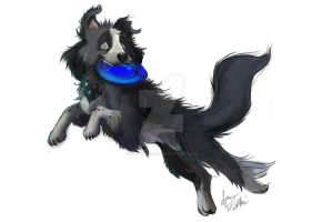 Collie by Mad--Munchkin