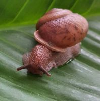 Snail On Leaf by MoonGazer9