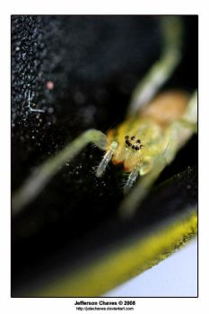 Green Spider - Macro Photo by jotachaves