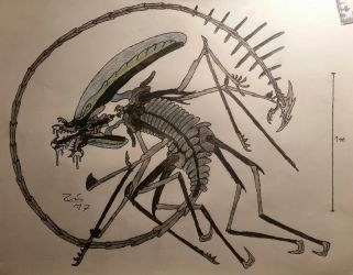 pure blood Xenomorph by TheDubstepAddict