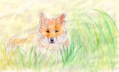 Little Fox by anythingLDA