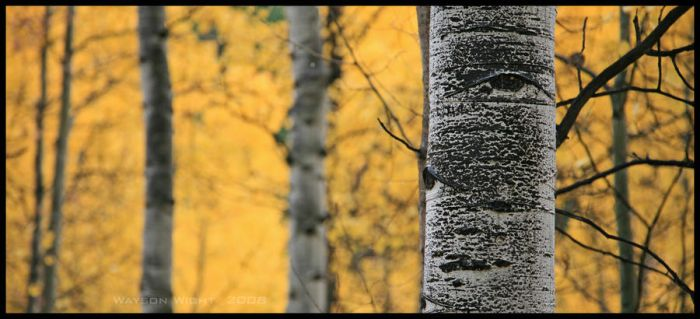 Black, white, and yellow by tourofnature