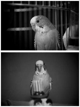 parrot wavy by M0nr0