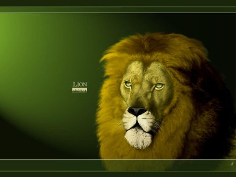 Lion :wallpaper: by Prometeus