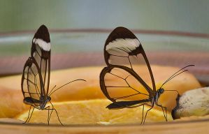 Butterfly Stock 09 by NellyGraceNG