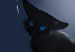 Cinderpelt by BlueHeartwolf