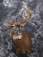 Funky Buck by DiamondDustTaxidermy