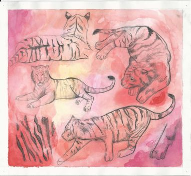 Tigers (4 of 4) by ErinDromeda