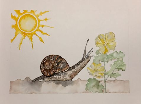 Florida Snail in Summer  by mybuttercupart