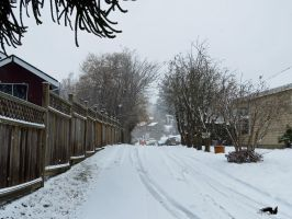 Snow Up A Old Driveway by wolfwings1