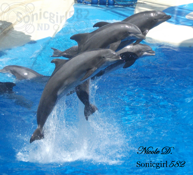 Caught in MOTION! Dolphins jumping! by Sonicgirl582