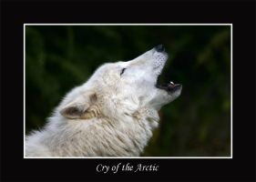 Cry of the Arctic by WindCrest
