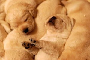 Sierra puppies 39 by ManicMechE