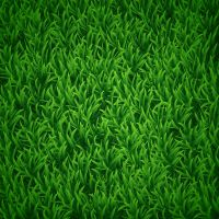 How to Create Vector Grass in Illustrator by lazunov