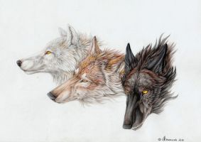 Wolfblood by Drachenseele