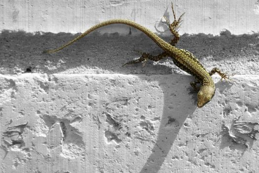 Lizard on the Wall by Chiron178