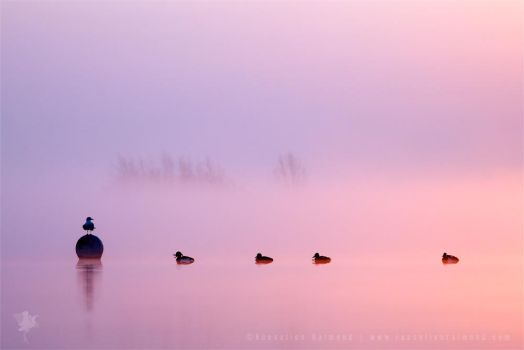 Empty Spaces IV | Sunrise in the Mist by thrumyeye