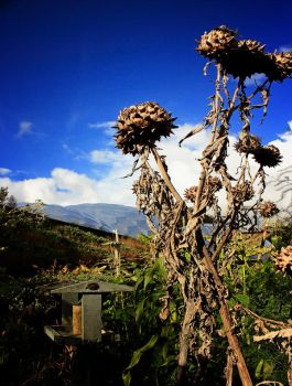 End of Summer - Eden Project by Coigach