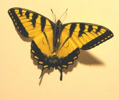 Butterfly 4 by markopolio-stock