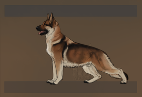 SR GSD - Crevan by Sumac-Ridge