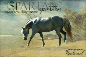 Spartan by Impressive-Instant