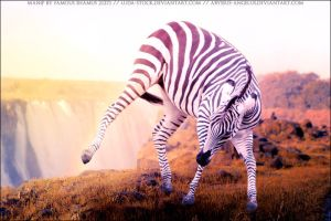 Zebra for Modnight 01 by FamousShamus109