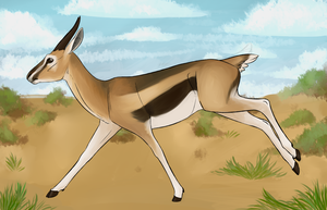 Grace - Thomson's Gazelle by Biscottimon