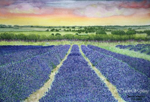 Lavender Fields pt 7 by traciewayling