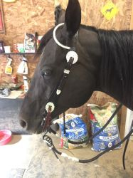 Show bridle stock 1 by Stripe13