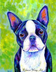 Colorful Boston Terrier Dog by rebeccawangart