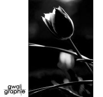 black and white spring 6 by Gwali