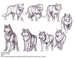 Wolf Motion Study by mell0w-m1nded