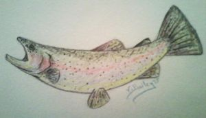 Rainbow Trout by Umberink
