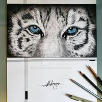 Tiger eyes by almberger