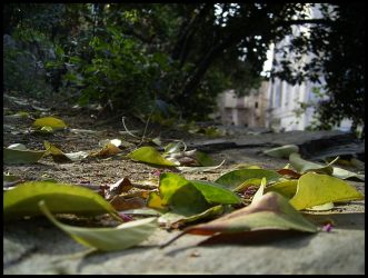 Romieu - Path of Leaves by michelv