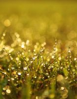 The dew in the morning by marshalbains
