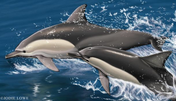 Leaping Common Dolphins by Oracle88